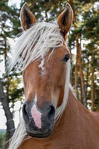brown horse closeup photography