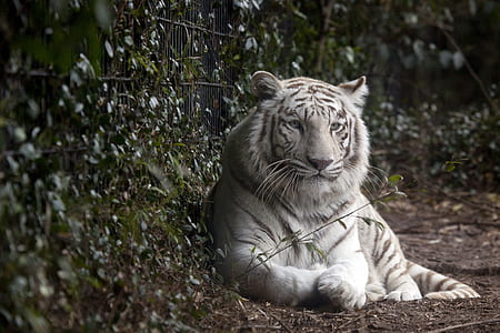 white tiger near green leafed plant