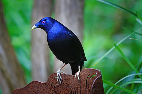 selective focus photography of blue starling bird