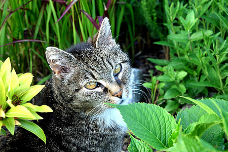 adult silver tabby cat in between plants