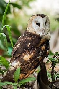closeup photo of a brown owl