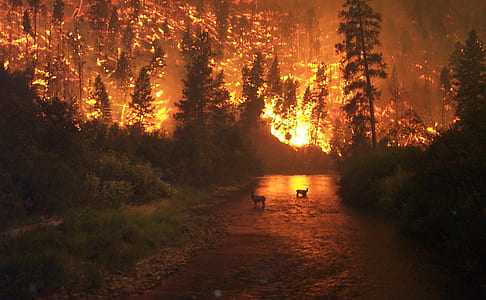 forest fire scenery