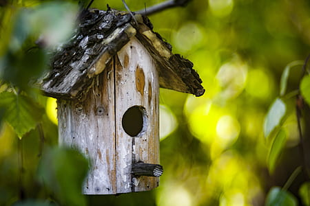 bokeh photography of brown birdhouse