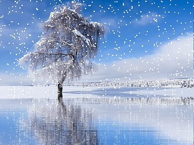 bare tree with snow