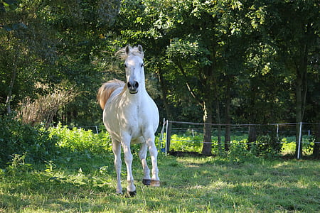 white horse near green leaves trees on green grass field