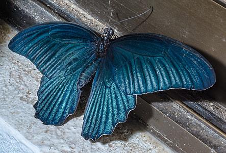 blue butterfly decor