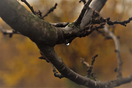 Close-Up Photography of Tree Branches