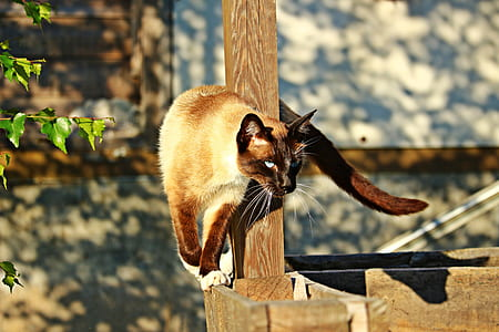 photo of cat near brown fence