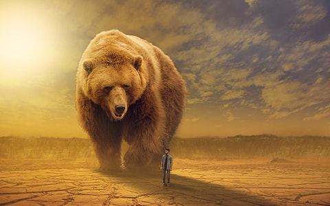 brown bear with man