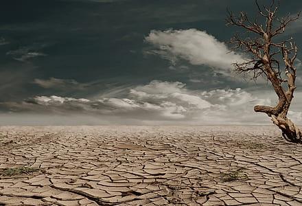 no leaf tree stands on crack soil at daytime