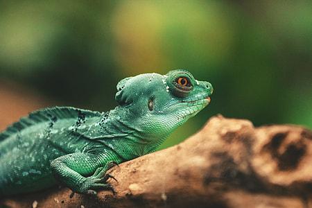 Closeup shot of a lizard reptile