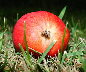 Red Round Fruit on Green Grass