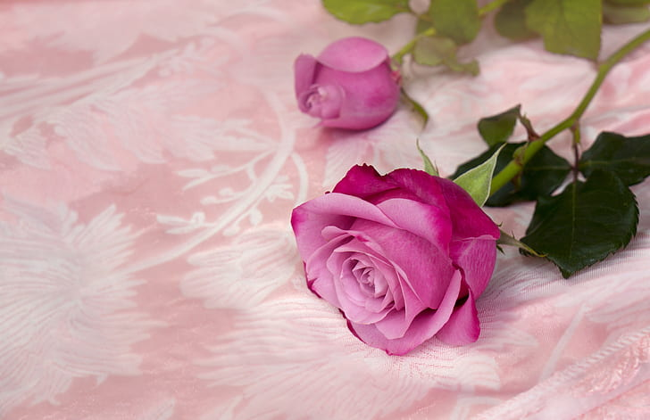 pink rose on top of pink textile