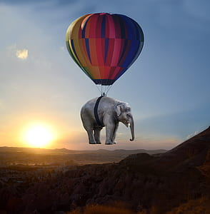 hot air balloon elephant illustration