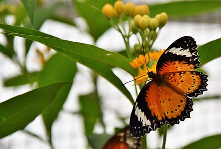 brown and black leopard butterfly on yellow petaled flower