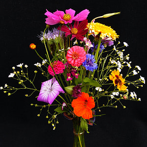 photography of assorted flowers