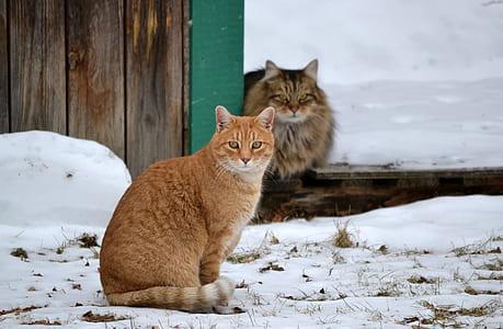orange Tabby cat near brown wooden wall