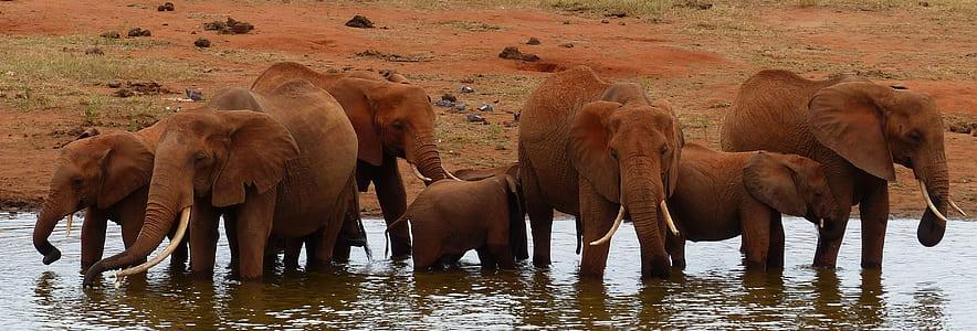 elephants in water near land