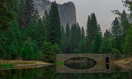 concrete bridge over body of water surrounded with pine trees