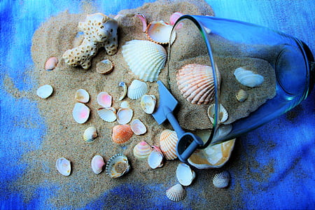 assorted seashells on brown sand