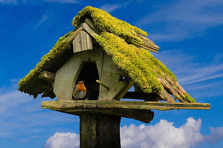 European robin perched on grey wooden birdhouse