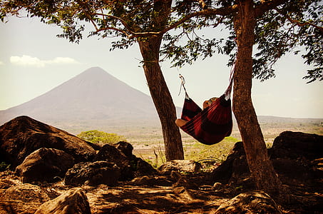 person lying on brown hammock in between two trees during daytime