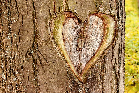 heart on brown tree trunk