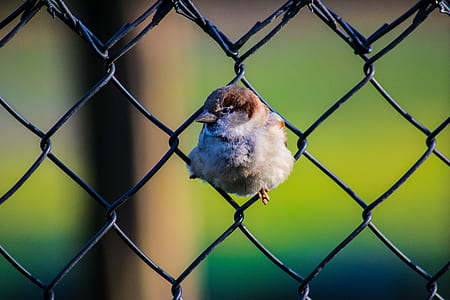 brown bird on chain link fence