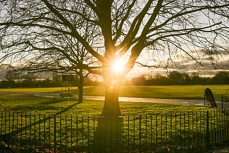 Park Fence Tree Sunset