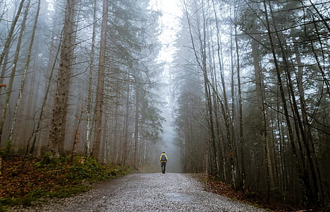 man walking on eerie forest