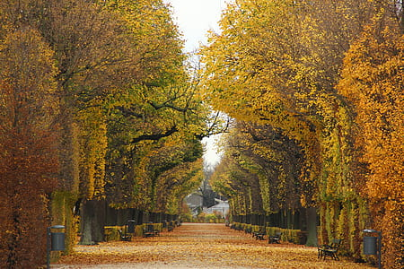 yellow and orange leaf trees
