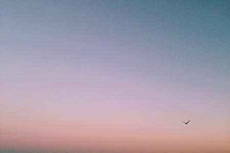 bird flying over the horizon