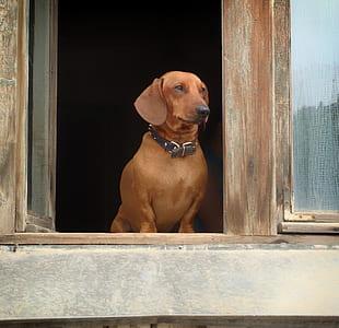 brown dog on window