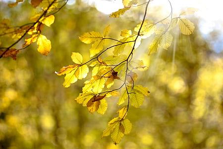 orange and green leaf tree