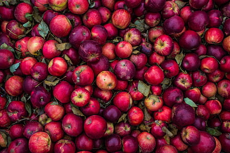 purple and red Apple lot