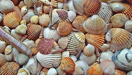 assorted-color seashells
