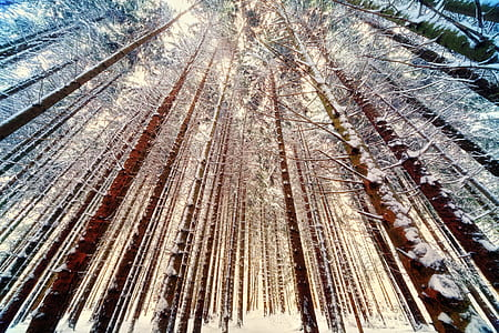 low angle photography of bare trees