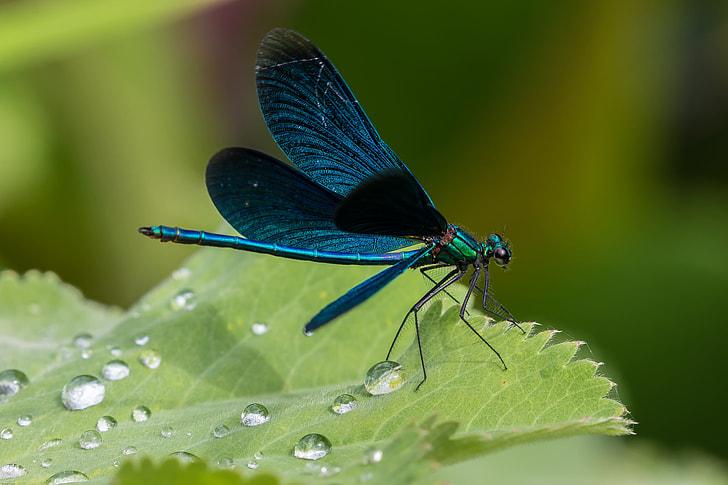 blue damselfly perched on green leaf