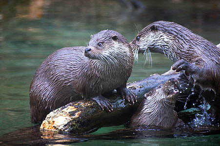 two otters on branch during day