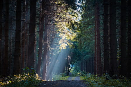 road in between forest trees at daytime
