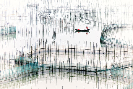 fishpond drawing