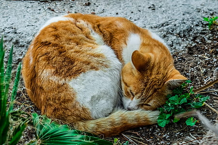 orange and white cat beside green plant