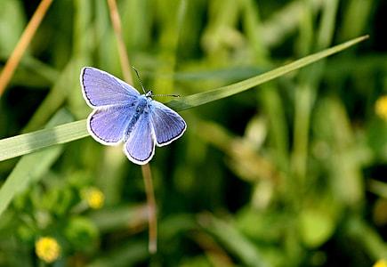 blue butterfly on green leaf plants