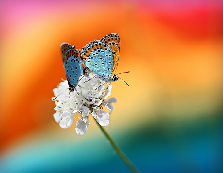 brown and blue butterflies on white petaled flowers