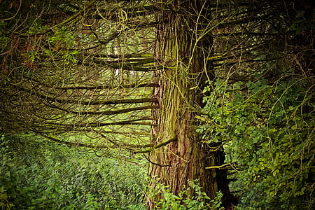 photo of green forest trees