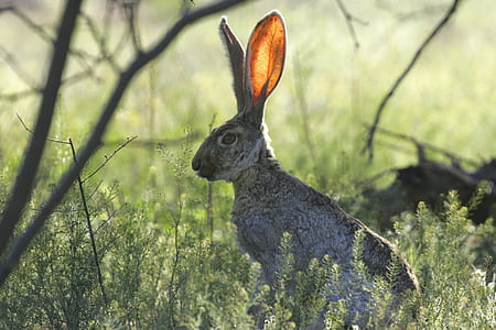 hare on grass