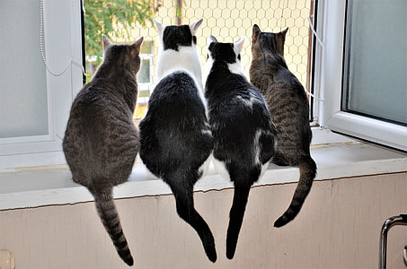photo of tabby cats looking outside window