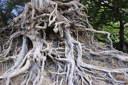 closeup photo of gray tree roots