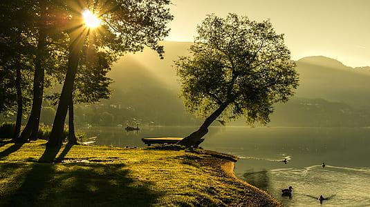 gray tree beside the lake