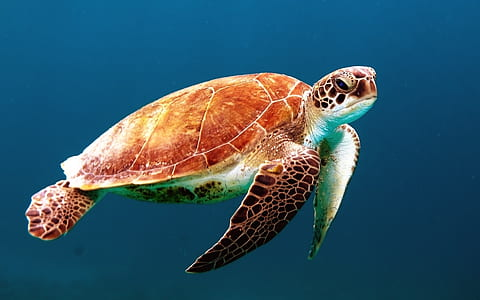 closeup photo of brown and black turtle